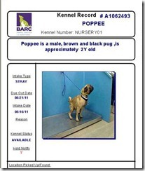 kennel card 2